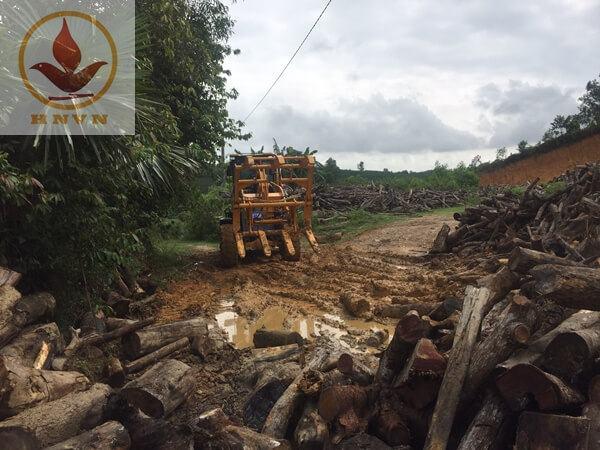 Máy xúc lật JF932G làm việc tại nhà máy chế biến gỗ ở Ninh Bình-3